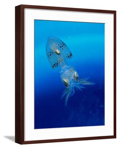 Baby Squid--Framed Art Print