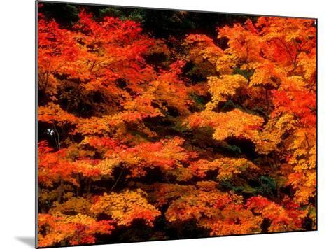 Autumn Leaves--Mounted Photographic Print