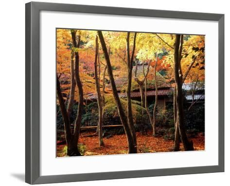 Maple Trees at Giou-Ji Temple in Autumn, Kyoto, Japan--Framed Art Print