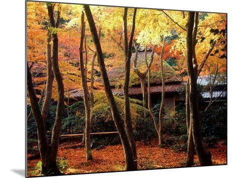 Maple Trees at Giou-Ji Temple in Autumn, Kyoto, Japan--Mounted Photographic Print