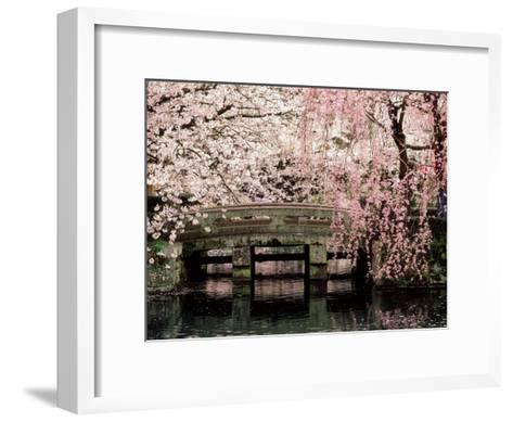 Cherry Blossoms, Mishima Taisha Shrine, Shizuoka--Framed Art Print