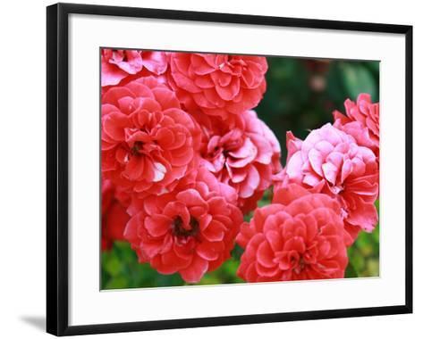Roses 1-Ryuji Adachi-Framed Art Print