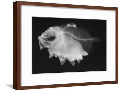Ox-Eyed Oreo-Sandra J^ Raredon-Framed Art Print