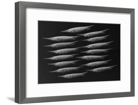 Grooved Razorfish-Sandra J^ Raredon-Framed Art Print