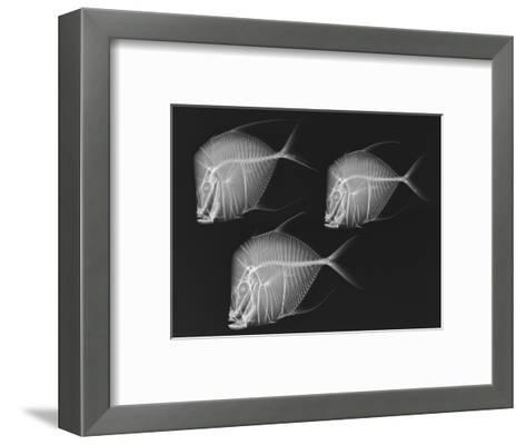Lookdown-Sandra J^ Raredon-Framed Art Print