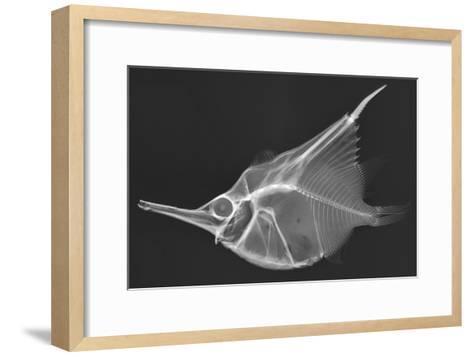 Orange Bellowfish-Sandra J^ Raredon-Framed Art Print