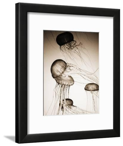 Jellyfish in Motion 2-Theo Westenberger-Framed Art Print