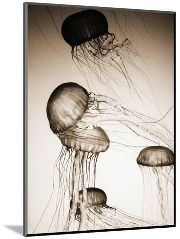 Jellyfish in Motion 2-Theo Westenberger-Mounted Photographic Print