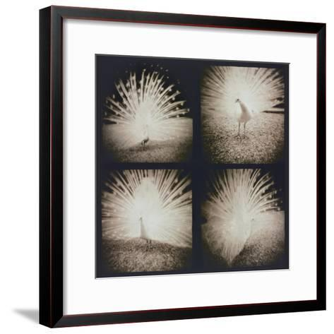 White Peacock Four times-Theo Westenberger-Framed Art Print