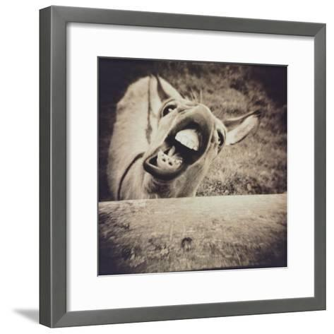 Bleating  Goat-Theo Westenberger-Framed Art Print