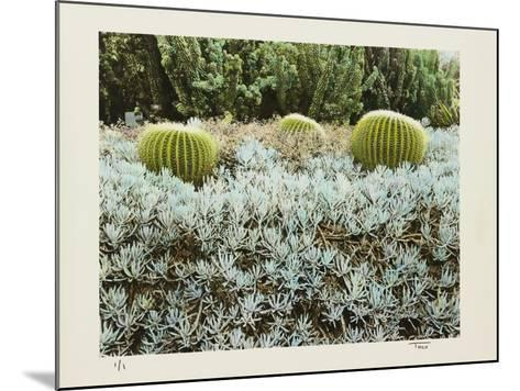 California Cactus Garden 1975-Theo Westenberger-Mounted Photographic Print