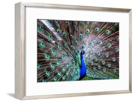 Wild Beauty II-Gail Peck-Framed Art Print