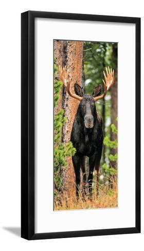 Skinny Chocolate Moose-Gary Crandall-Framed Art Print