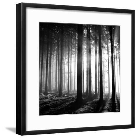 Wood Light--Framed Art Print