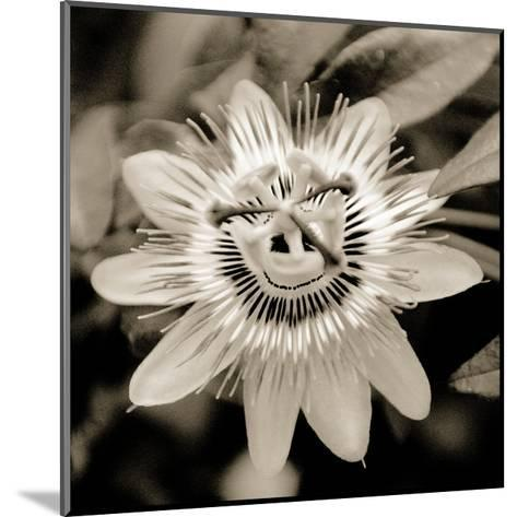 Blooming Flowers 5664-Rica Belna-Mounted Photographic Print