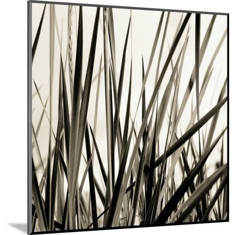 Grass and Reeds-Rica Belna-Mounted Photographic Print