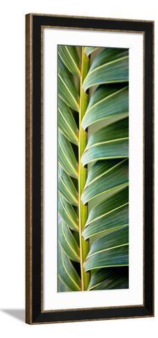 Palma I-Susan Bryant-Framed Art Print