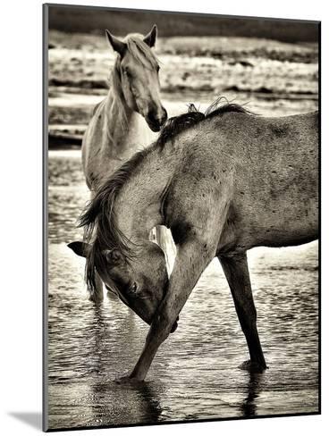 Beach Horses I-David Drost-Mounted Photographic Print