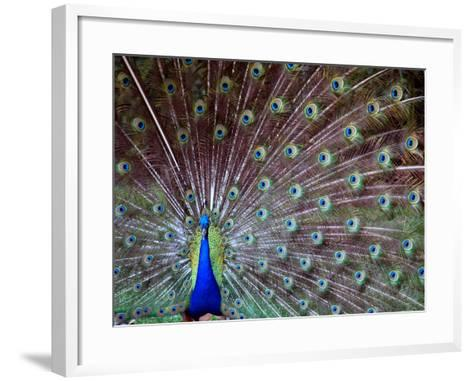 Wild Beauty I-Gail Peck-Framed Art Print