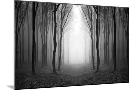 Dark Woods-PhotoINC-Mounted Photographic Print