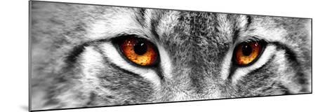 Lynx-PhotoINC-Mounted Photographic Print