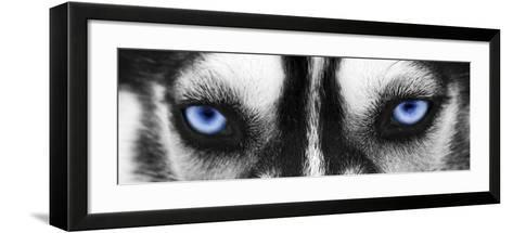 Husky-PhotoINC-Framed Art Print