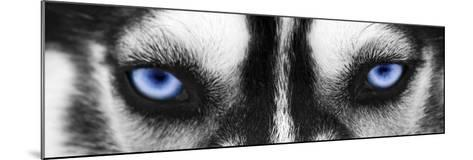 Husky-PhotoINC-Mounted Photographic Print
