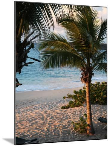 Sunset Palms II-Susan Bryant-Mounted Photographic Print
