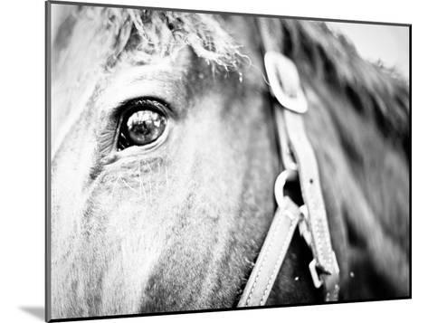 Horseback Riding I-Susan Bryant-Mounted Photographic Print