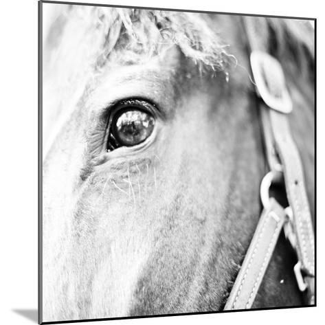 In the Stable I-Susan Bryant-Mounted Photographic Print