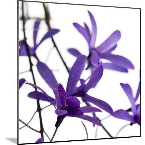 Purple Blossom--Mounted Photographic Print