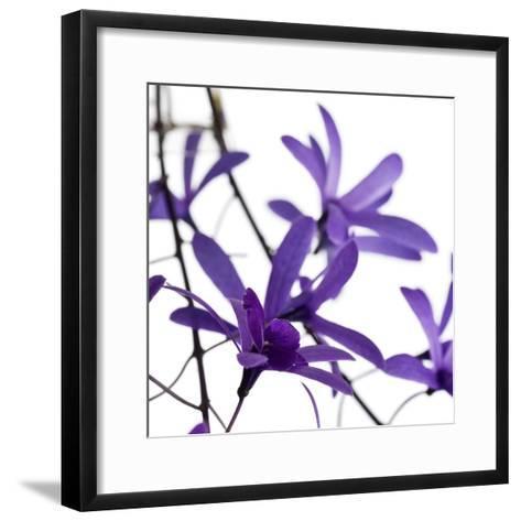 Purple Blossom--Framed Art Print
