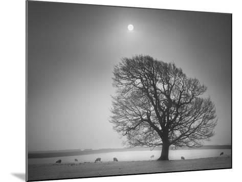 Evening Light II-Martin Henson-Mounted Photographic Print