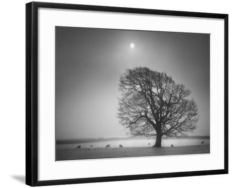 Evening Light II-Martin Henson-Framed Art Print