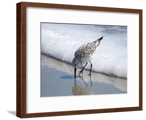 Sandpiper I-Bruce Nawrocke-Framed Art Print