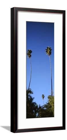 Palm Trees, Sinaloa, Baja California-Barry Herman-Framed Art Print