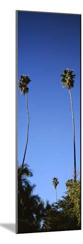 Palm Trees, Sinaloa, Baja California-Barry Herman-Mounted Photographic Print