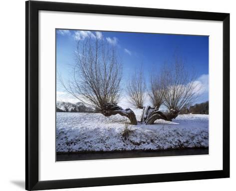 Wilnter Willow Tree by River at Meerbusch, Buderich - Germany-Florian Monheim-Framed Art Print