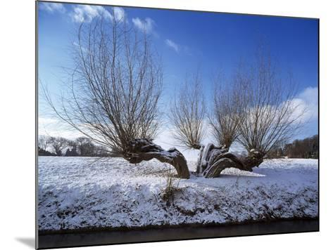 Wilnter Willow Tree by River at Meerbusch, Buderich - Germany-Florian Monheim-Mounted Photographic Print
