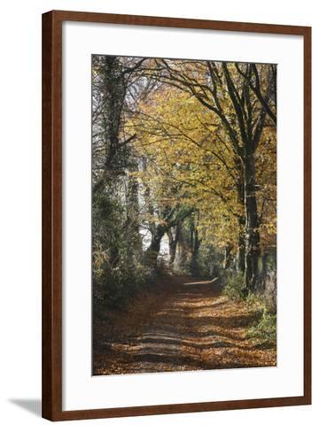 Country Road in Autumn, Hanson, Kornelimunster, Nordrhein-Westfalen, Germany-Florian Monheim-Framed Art Print