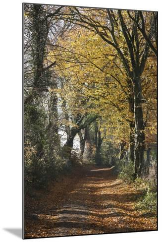 Country Road in Autumn, Hanson, Kornelimunster, Nordrhein-Westfalen, Germany-Florian Monheim-Mounted Photographic Print