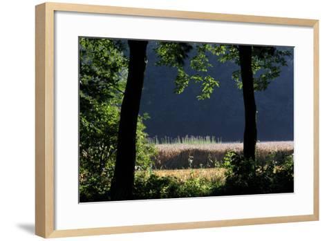 Silhouette of Two Trees at Moyland, Schloss - Germany-Florian Monheim-Framed Art Print