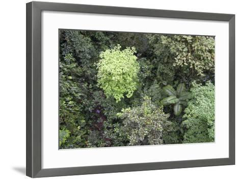 A Birds-Eye-View of Different Shades of Green from Trees Making Up the Forest-Stacy Bass-Framed Art Print
