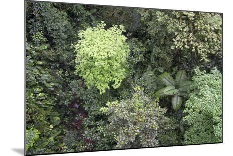 A Birds-Eye-View of Different Shades of Green from Trees Making Up the Forest-Stacy Bass-Mounted Photographic Print