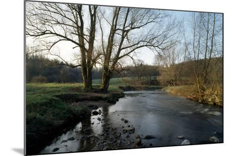 Bare Trees and River at Wurselen- Bardenberg,Wurmtal - Germany-Florian Monheim-Mounted Photographic Print