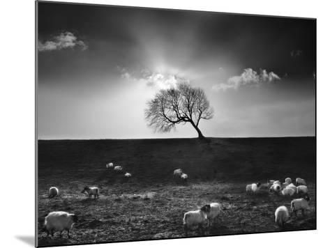 The Gathering-Martin Henson-Mounted Photographic Print