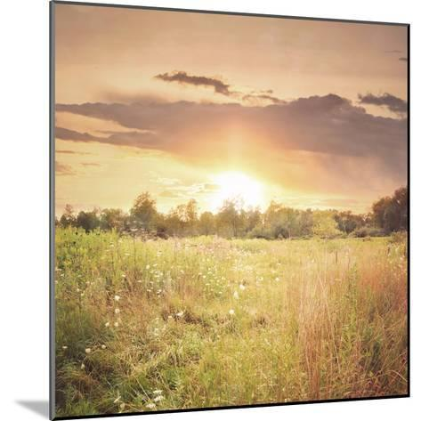 Field of Warmth Square-Kelly Poynter-Mounted Photographic Print