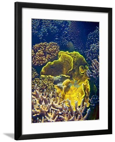 Barrier Reef Coral III-Kathy Mansfield-Framed Art Print