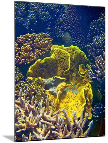 Barrier Reef Coral III-Kathy Mansfield-Mounted Photographic Print
