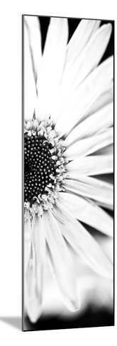 White Bloom I-Susan Bryant-Mounted Photographic Print